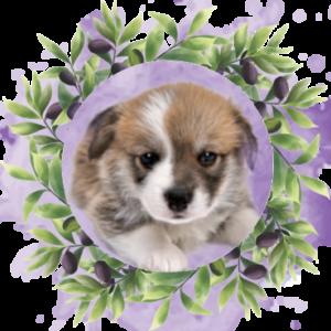 oliven-hund